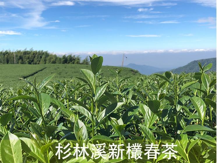 環保包系列 -【杉林溪新欉春茶】